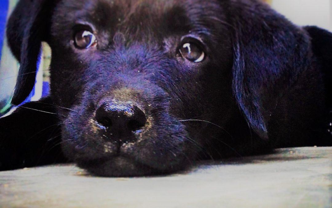 E se i cani dicessero di  no?