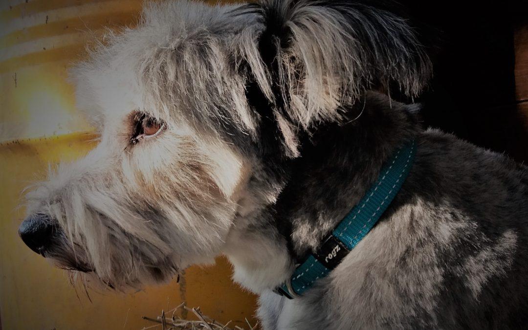 Cosa accade davvero in una stanza di Ospedale: dialogo tra Bambini e Cani