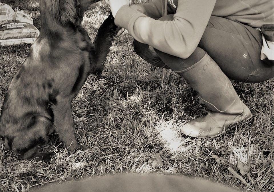 La Cura base della Relazione.Tra l'Animale e la Persona