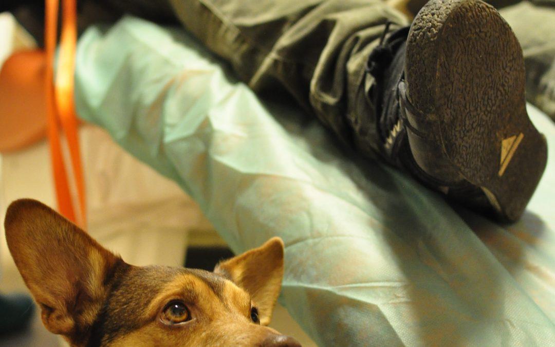 Le zampe dei nostri cani sono più pulite delle nostre scarpe?